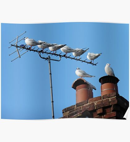 Urban Roost Poster