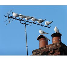 Urban Roost Photographic Print