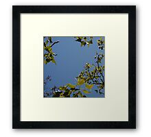 Sky Through Trees Framed Print