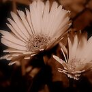 Softness Of Two by Stacy Colean