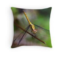 Golden Armour Throw Pillow