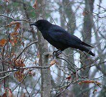 Winter Crow by Jean Gregory  Evans