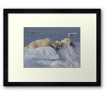 Bears On Ice 2 Framed Print