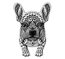 Frenchie (French Bulldog) Photographic Print