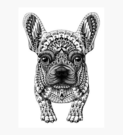 Frenchie (French Bulldog) Photographic Print