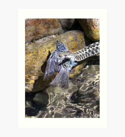Snake with Bird (my dads pic) Art Print