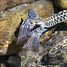 Snake with Bird (my dads pic) by Kimberly Palmer