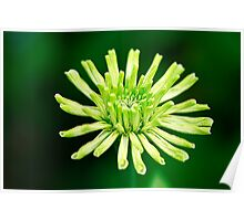 Green On Green Poster