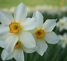 Spring time by Catherine Tranter