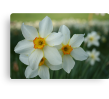 Spring time Canvas Print