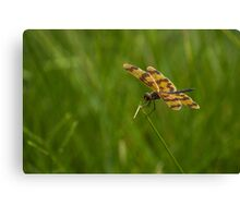 Patterned Wings Canvas Print