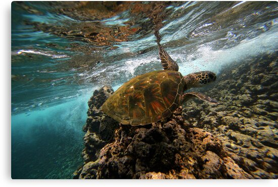 Turtle Time by ManaPhoto