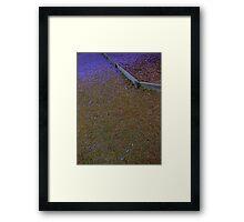 Jacaranda Carpet Framed Print