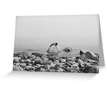 Seal on a rock Greeting Card
