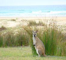 Australian wildlife by Of Land & Ocean - Samantha Goode