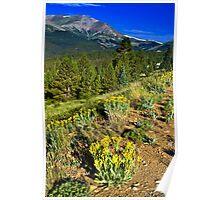 Wildflower Ridge Poster