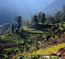 Himalayan Stepped Fields - Nepal by aidan  moran