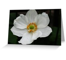 Fragile Anemone Japonica Greeting Card