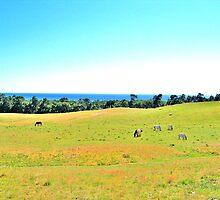 Rural Landscape of Scania by HELUA