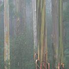 mountain ash by Donovan wilson