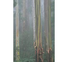 mountain ash Photographic Print