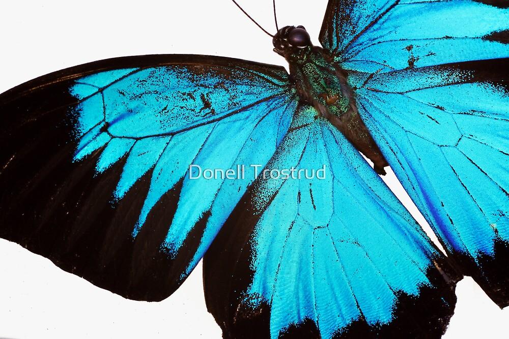 Cyan Wings by Donell Trostrud