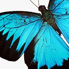 Cyan Wings by Donell Trostrud