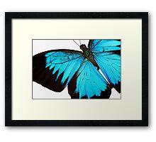 Cyan Wings Framed Print