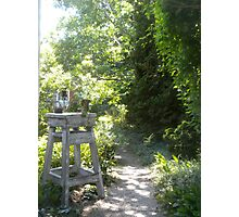 Fairy Path Photographic Print