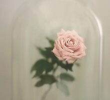 The Last Rose by Trish Mistric