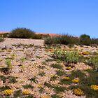 Desert flowers by Maggie Hegarty