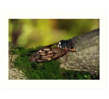 Semi Cicada Art Print
