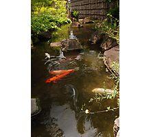 Koi Carp River Photographic Print