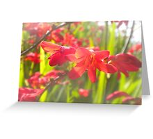 A Flash of Red Greeting Card