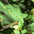 Crawley, flighty, icky thing. by jansnow