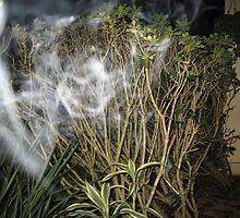Smokin by spiritedwings