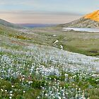 Wildflowers, Lake Cootapatamba, Kosciuszko, New South Wales, Australia by Michael Boniwell