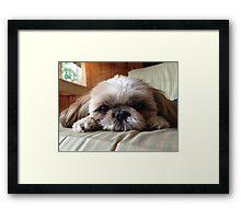 Meeka the Puppy Framed Print