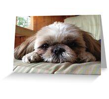 Meeka the Puppy Greeting Card