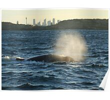 Humpback Whale - with Sydney skyline in the background Poster