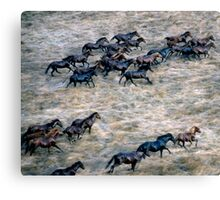 THE BRUMBY RUN Canvas Print