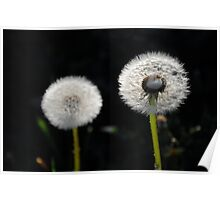 Dandelion (As is) Poster