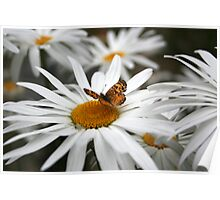Daisy & Butterfly Poster