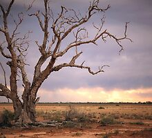 Outback Storm by dmbphotography