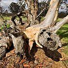 Twisted Tree Trunk (3) by Wolf Sverak
