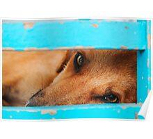 sleepy stray dog Poster