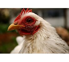 Floortje the chook Photographic Print