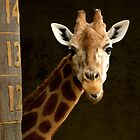 A Gentle Giant by Corrine Symons