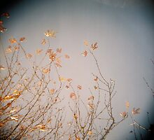 Last Leaves by purelydecorative