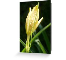 The night before...Emerge and reborn.... Greeting Card